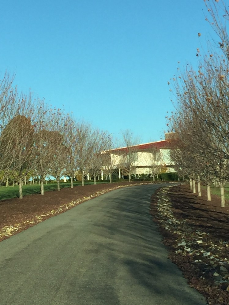 Beautiful tree lined driveway to Cellar Door
