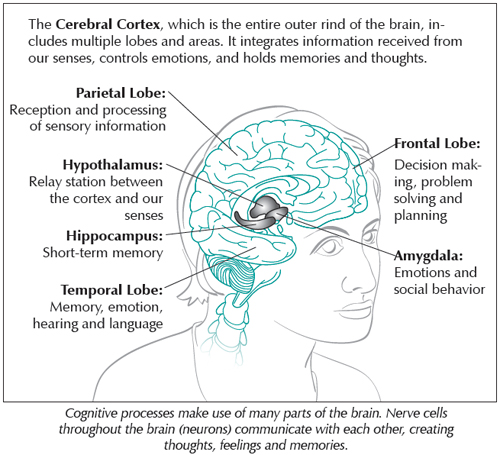 Cognition and memory womens international pharmacy dr gayatri devi states that the brain is the most fascinating and least understood organ in the entire body there is much we dont know about how the ccuart Choice Image