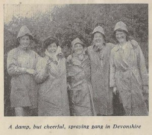 Damp, but cheerful, spraying gang in Devonshire