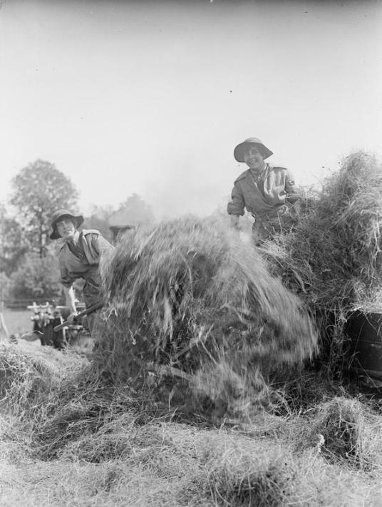 Member of the Women's Forage Corps feeding a hay baler Source: IWM Q30688