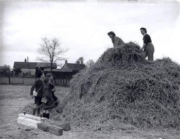 Land Girls haymaking Source: Courtesy of Stuart Antrobus.