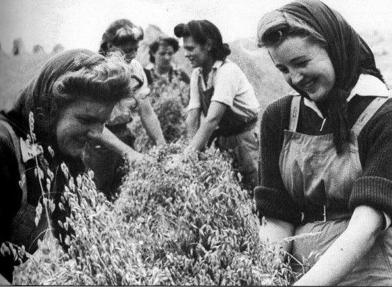 Stooking the sheaves in Buckinghamshire, summer 1944