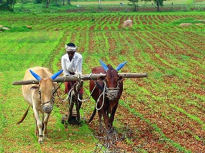 Rural travel in India