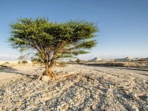 lone tree in a barren land