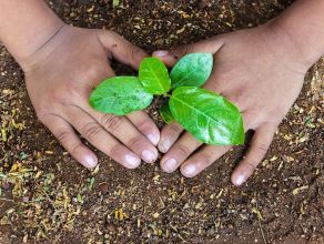 seeds of gender equality