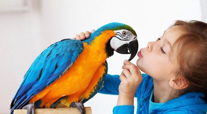 Top 5 benefits of getting a pet bird