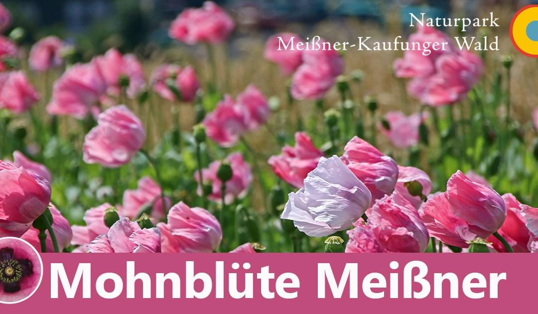 Mohnblüte im Frau-Holle-Land