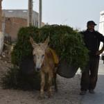 Mrokkanischer Landwirt