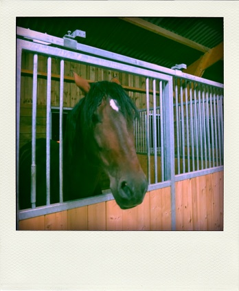 cheval-pola