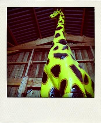 girafe-pola