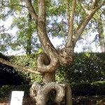Unique and Unusual Trees 4