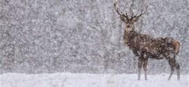 1 septillion snow crystals drop in a winter