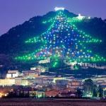 world's largest christmas tree