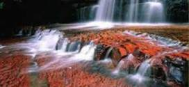 Cano Cristales – colorful river in Colombia