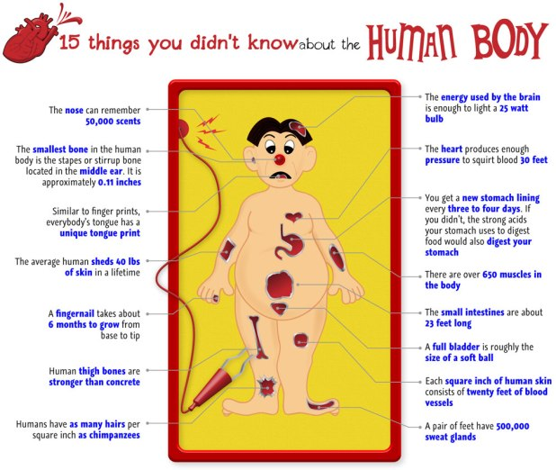 15 things you didnt know about the human body