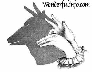 Finger Art fox