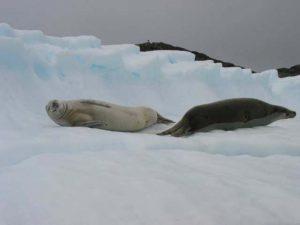 Antarctica Photo 05