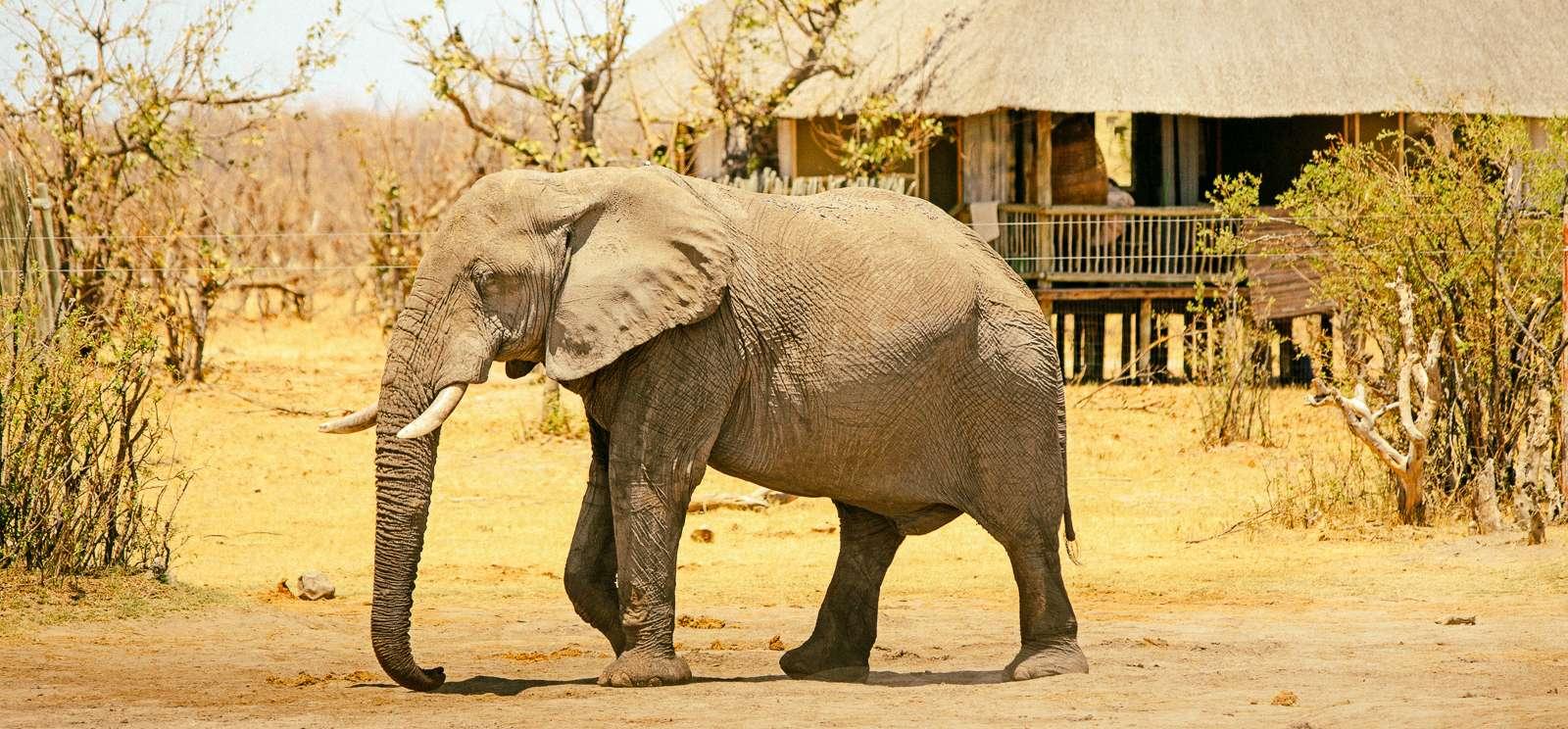 Victoria Falls And Chobe National Park Budget Tour