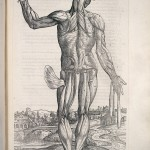 L0021650 A. Vesalius, De humani corporis fabrica. Credit: Wellcome Library, London. Wellcome Images images@wellcome.ac.uk http://wellcomeimages.org 'Decima musculatorum tabula'. De humani corporis fabrica Andreas Vesalius Published: 1543 Copyrighted work available under Creative Commons Attribution only licence CC BY 4.0 http://creativecommons.org/licenses/by/4.0/