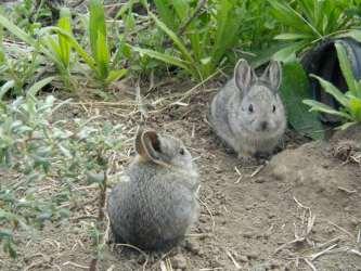 Smallest Rabbit