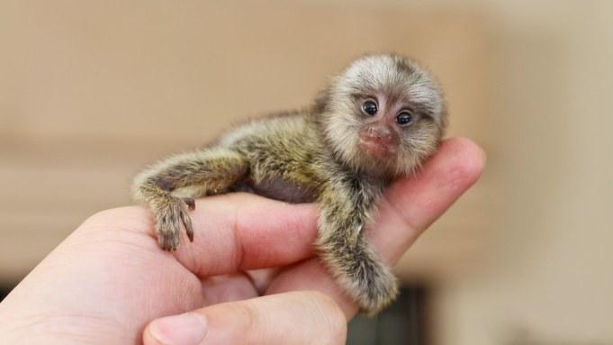 Smallest Living Animals