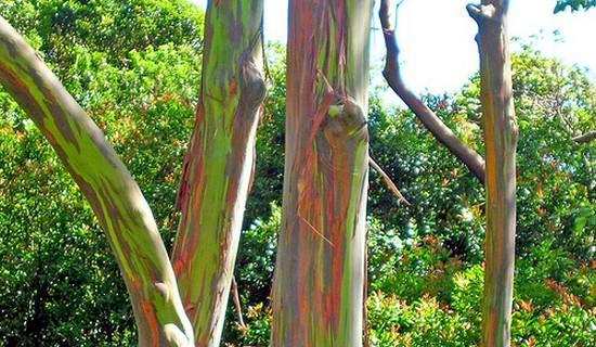 10 Wonderful Trees