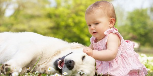 Pet - the best thing in this world