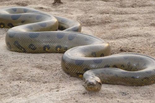 Most Dangerous Snake Species