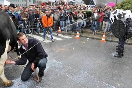 Spraying Milk most bizarre protests
