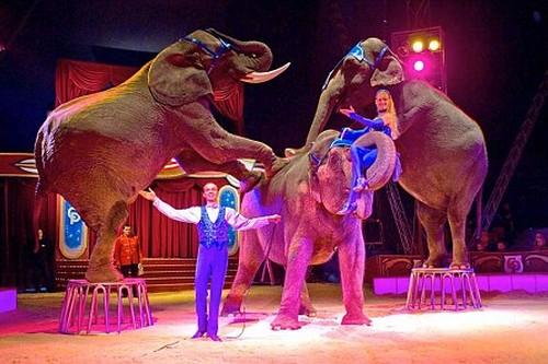 Jumbo, the Circus Elephant