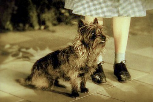 Toto, Terry, the Dog