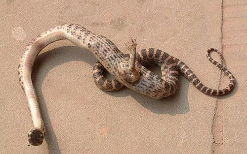 The Claw Footed Snake