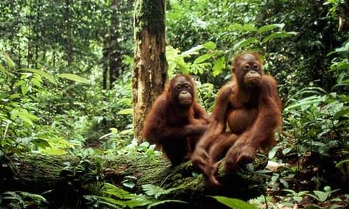 Sundaland 10 Endangered Forests