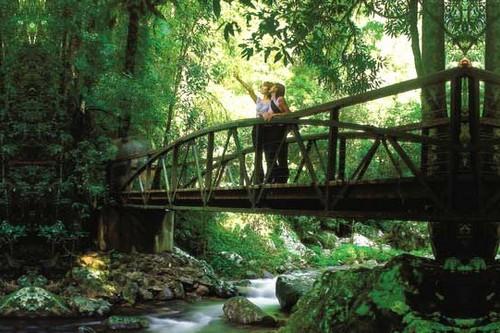 Springbrook National Park, Australia