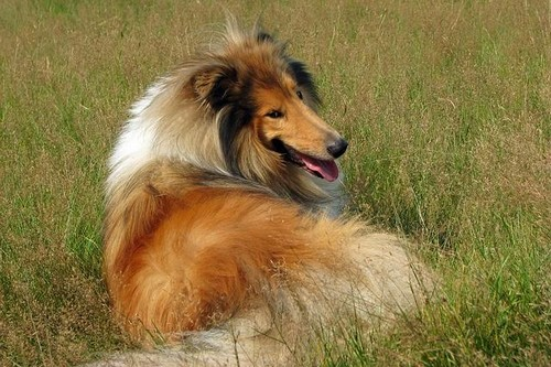 Dog Breeds to Join Your Family