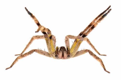 Top 10 Dangerous Spiders