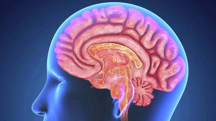 Tips to Boost Your Brain Function