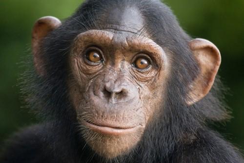 most intelligent animal species
