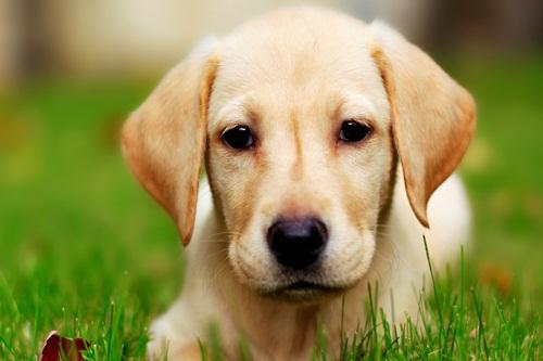 Smartest Animals Dogs