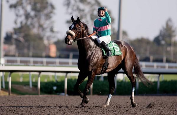 Zenyatta Best Race Horses