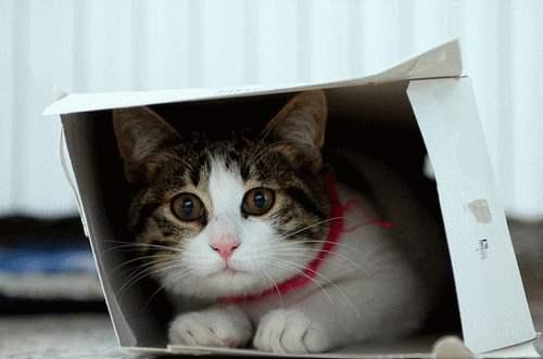 Gravity Kills Schrödinger's Cat