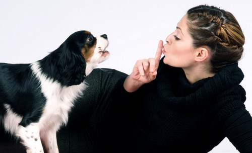 How To Make Your Dog Stop Barking