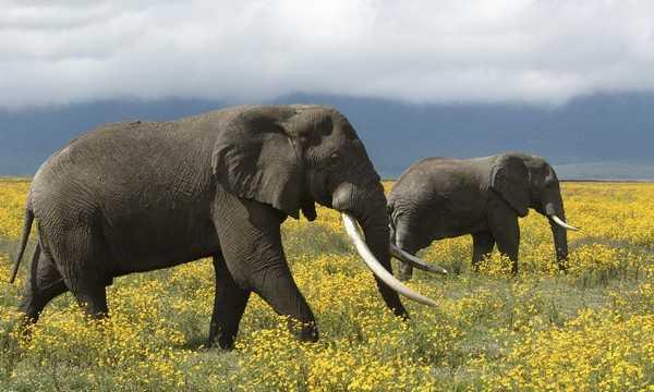 Elephants_Dangerous Legal Exotic Pets