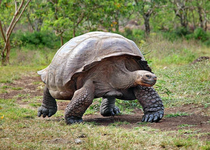Giant tortoise from the Galapagos - Animals with longest lifespan | Top 10 longest living animals
