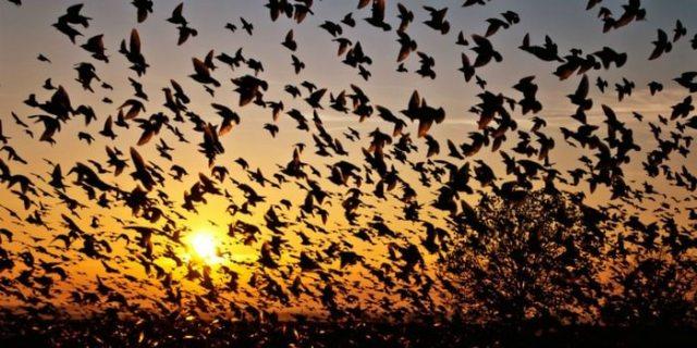 Bird Suicide Assam, Jatinga Valley