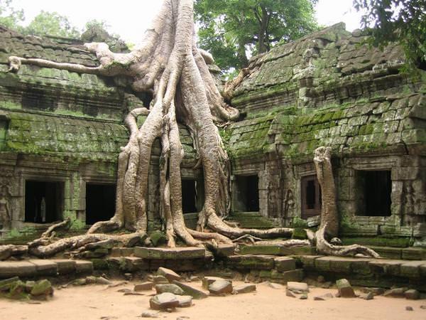Silk Cotton Trees Cambodia