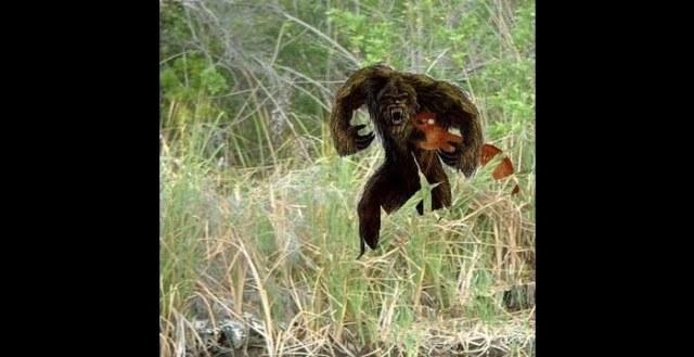 Skunk Ape Scariest Monsters