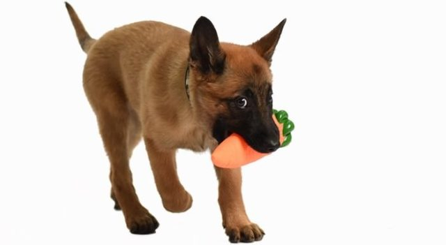 Tips for Taking Care of Your Dog's Teeth