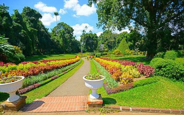 Peradeniya royal botanical garden