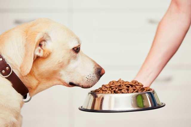 Animal food taster